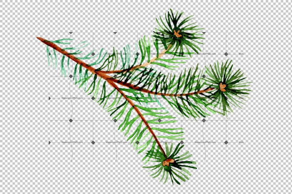 Branches Of Spruce And Pine Png Watercolor Set Digital
