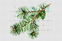Meuran de Spruce Agus Pine Png Watercolour Set Digital