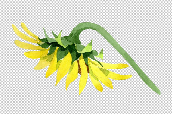Bright yellow sunflower watercolor png Flower