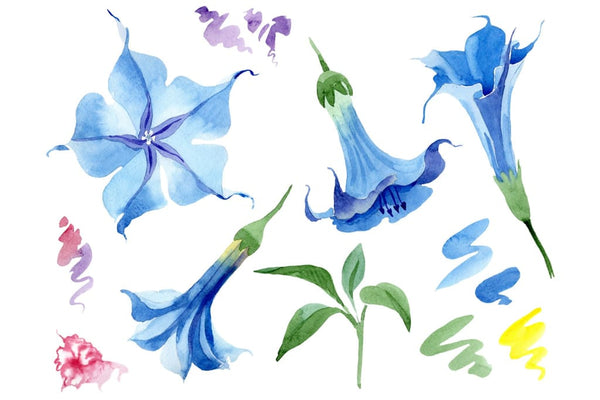 Brugmansia soft blue watercolor png Flower