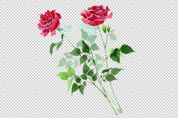 Bush of Roses pink and red Watercolor png