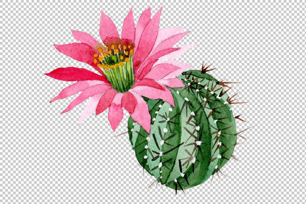 Cactus green spiny ordinary flower watercolor png Flower