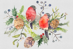 Bouquet Natal dengan bullfinch Watercolor png Digital