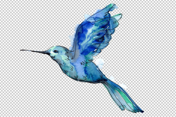 Colibri Small bird Watercolor png Flower
