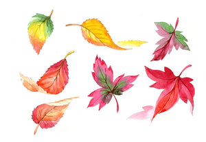 Colorful autumn leaves watercolor png set Flower