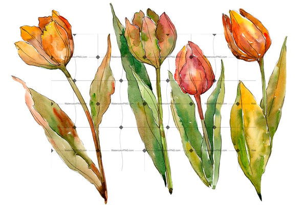 Colorful Autumn Tulips Png Watercolor Set Flower