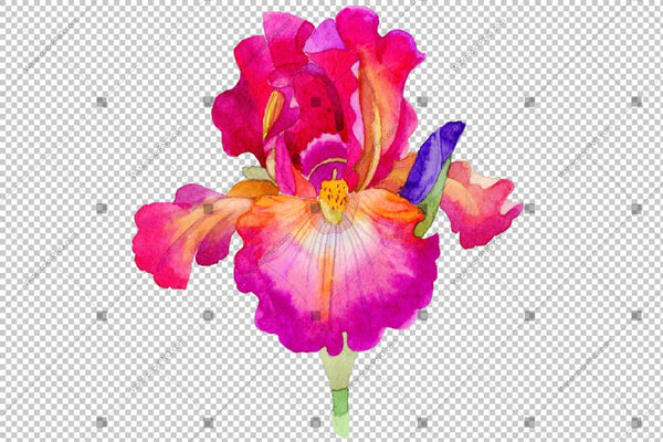 Colorful Irises Flowers Watercolor Png Flower