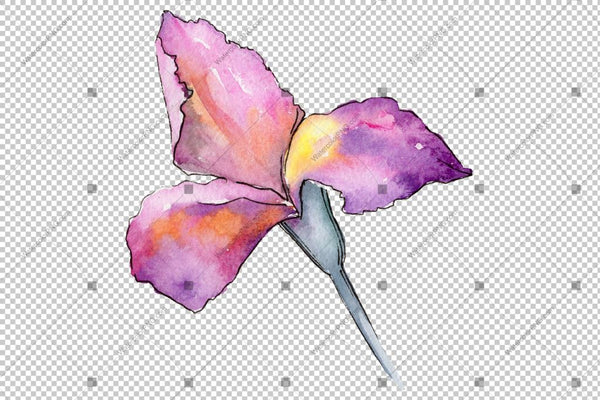 Irises Colorful Watercolor Png Lule Lule