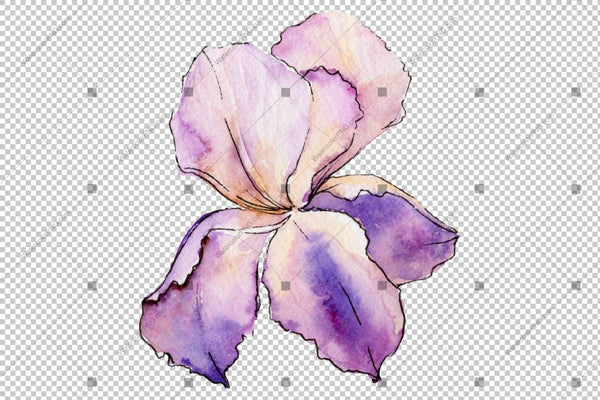 Colorful Irises Watercolor Png Flowers Flower