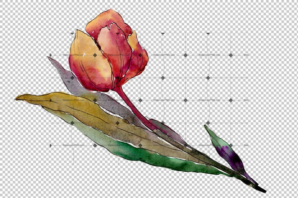 Colorful Tulips Png Watercolor Flower Set Flower