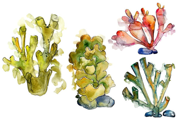 Corals Seafood Watercolor png Flower