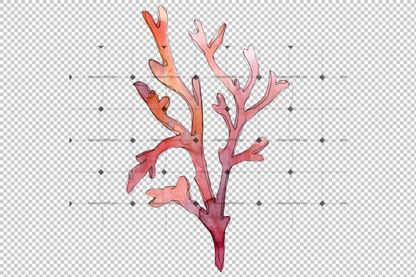 Corals Watercolor Png Flower