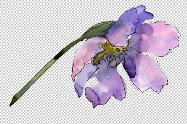 Cosmos flower blue Watercolor png Flower