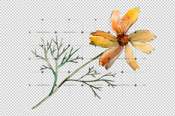 Cosmos Flower Png Watercolor Set Flower