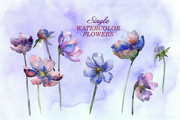 Cosmos flowers Watercolor png Digital