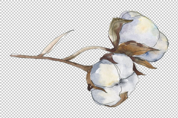 Cotton Watercolor png Flower