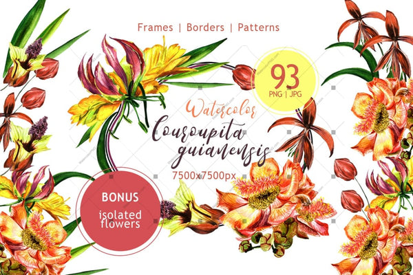 Couroupita Guianensis Png Watercolor Set Digital