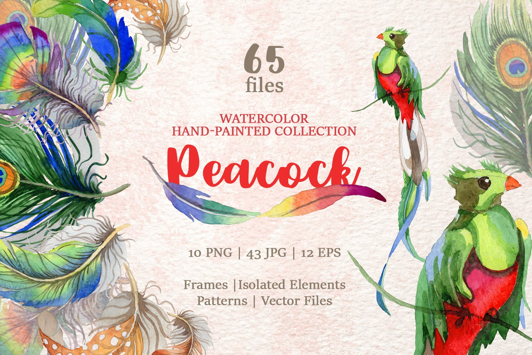 Peacock Watercolor png