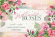 Wonderful pink roses PNG watercolor set