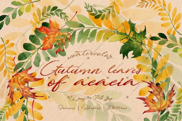 Autumn Leaves Of Acacia Png Watercolor Set Digital