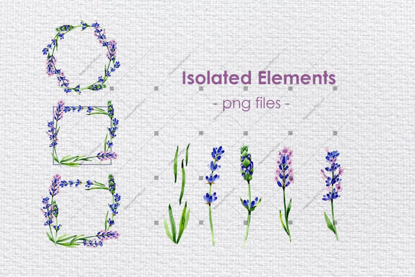 Holiday Purple Lavender Flowers Png Watercolor Set Digital