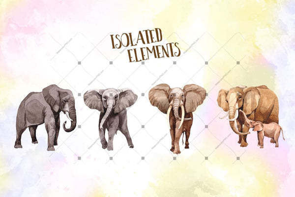 Animal Life Elephants Png Watercolor Set Digital
