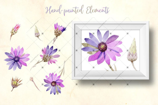 Purple Immortelle Png Watercolor Set Digital