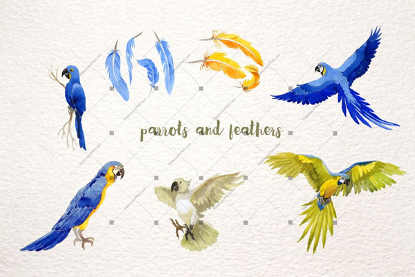 Watercolor Cool Parrot Png Bird Set Digital