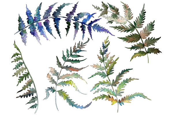 Polypodiopsis fern watercolor png