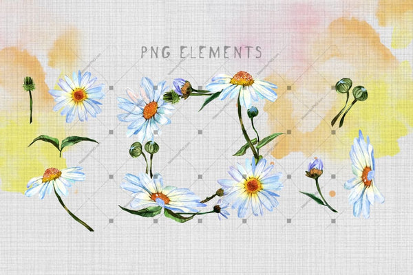 Cool Watercolor Daisies Png Set Digital