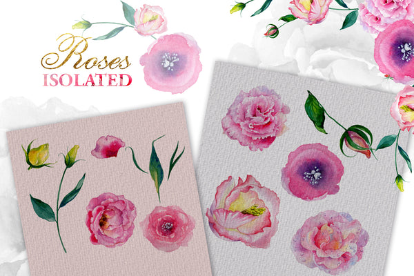 Pink roses Watercolor png