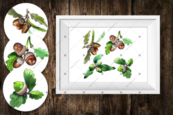 Acorn Plant Png Watercolor Set Digital