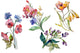 Wildflowers the beauty Watercolor png