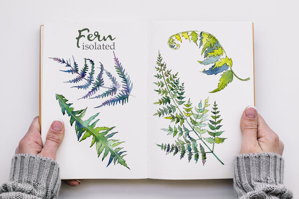 Fern Watercolor png