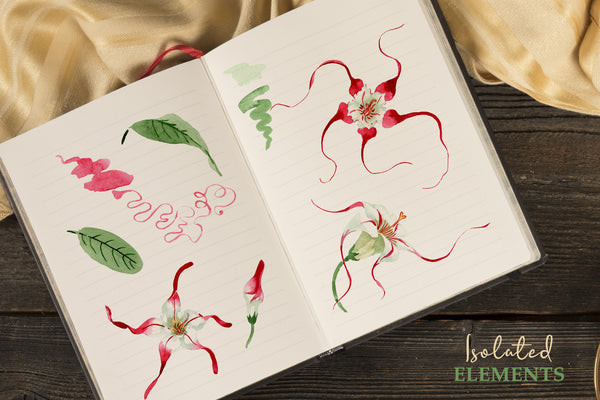 Strophanthus Watercolor png