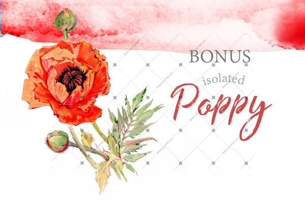 Acvariu Red Poppy Png Set Digital
