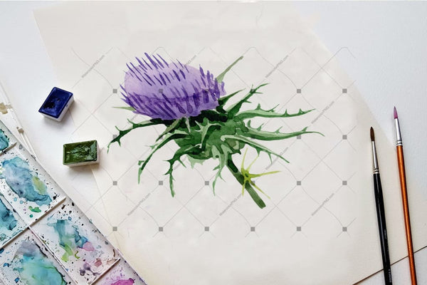Cool Thistle Png Watercolor Set Digital
