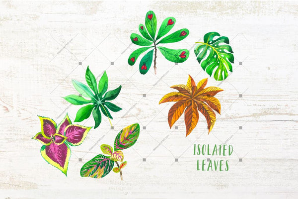 Exotic Tropical Set Png Watercolor Digital