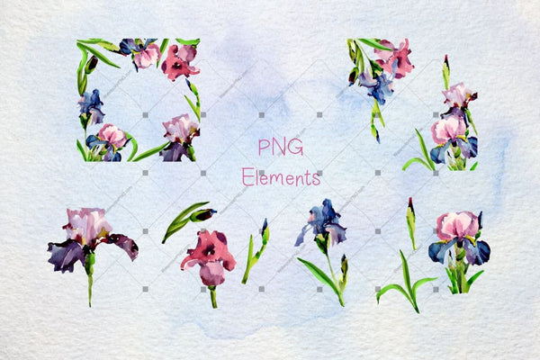 Tender Irises Png Watercolor Set Digital