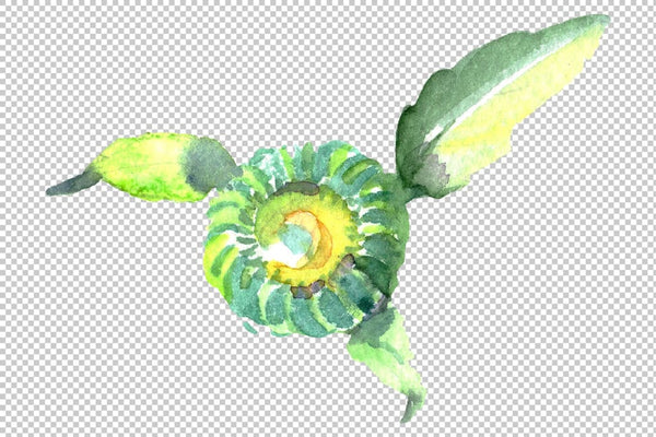 Daisy/chamomile Watercolor png Flower