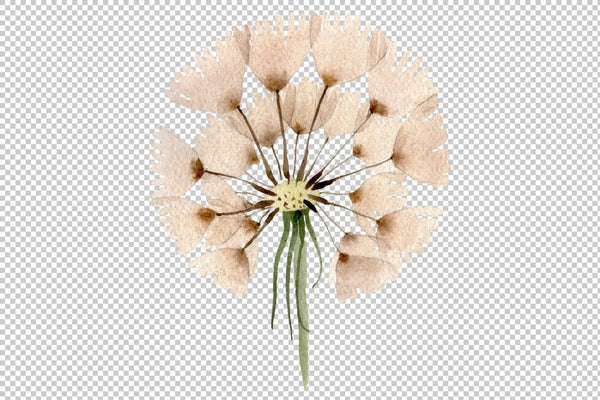 Dandelion Watercolor png Flower