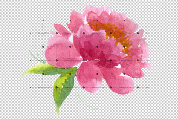 Delicate Colorful Peony Png Watercolor Set Flower