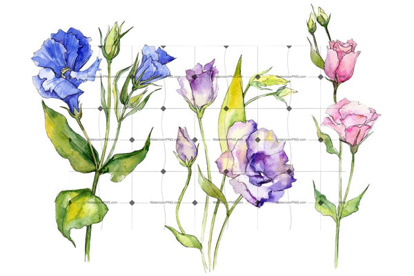 Delicate Eustoma Flower Png Watercolor Set Flower