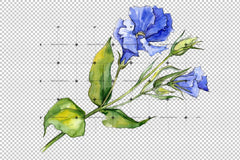 Delikat Eustoma Flower Png Akvarell Set Flower