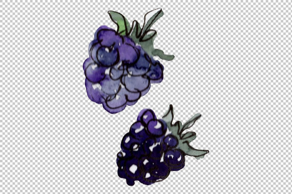 Dessert with blueberries Watercolor png Flower