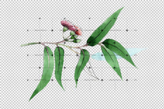 Eucalyptus Branch Png Watercolor Set Digital