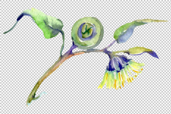 Eucalyptus Watercolor png Flower