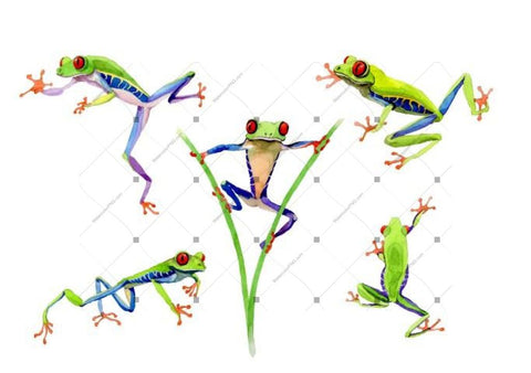Watercolor Frog royalty free images