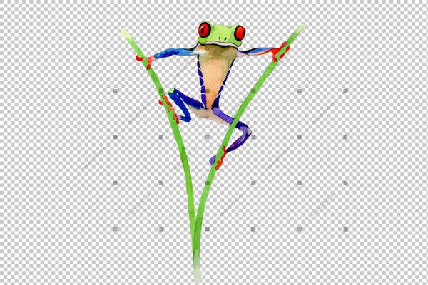 Exotic Frog Red-Eyed Png Watercolor Set Digital
