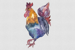 Farm animals: cock Watercolor png Flower